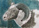 sheep, watercolor A3 2013
